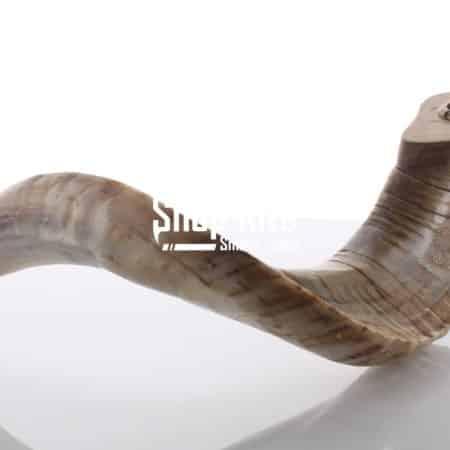 Ram Horn Natural Pipe